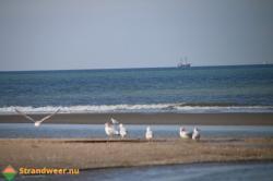 30 procent minder dieren in de Noordzee
