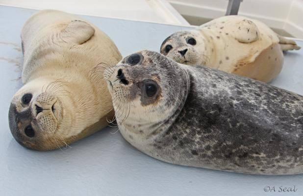 A Seal op zoek naar adoptanten