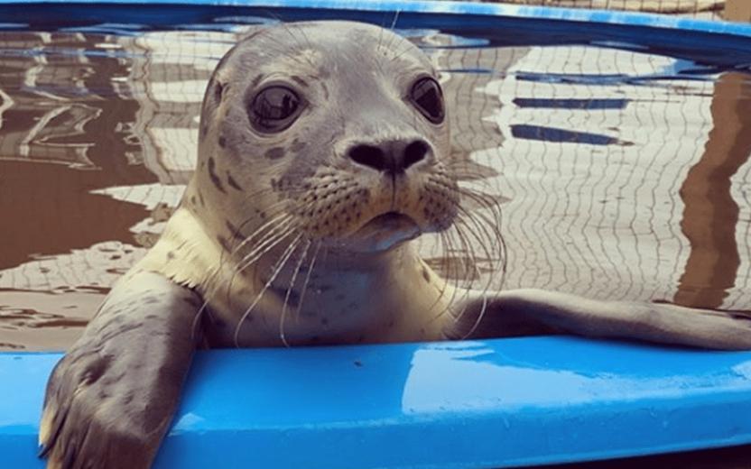 Dode pups zeehondenopvang Terschelling door oververhitting