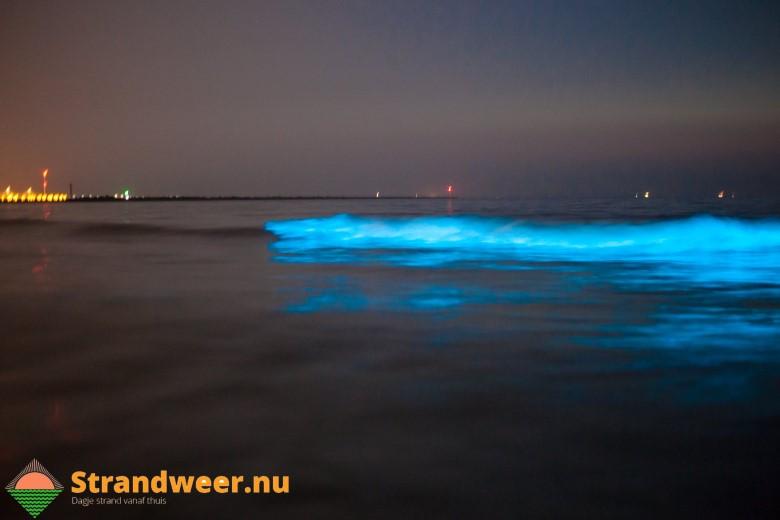 Zeevonk in Hoek van Holland