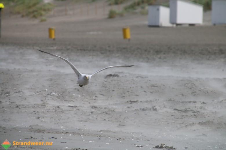 Het strandweer voor maandag 30 juli