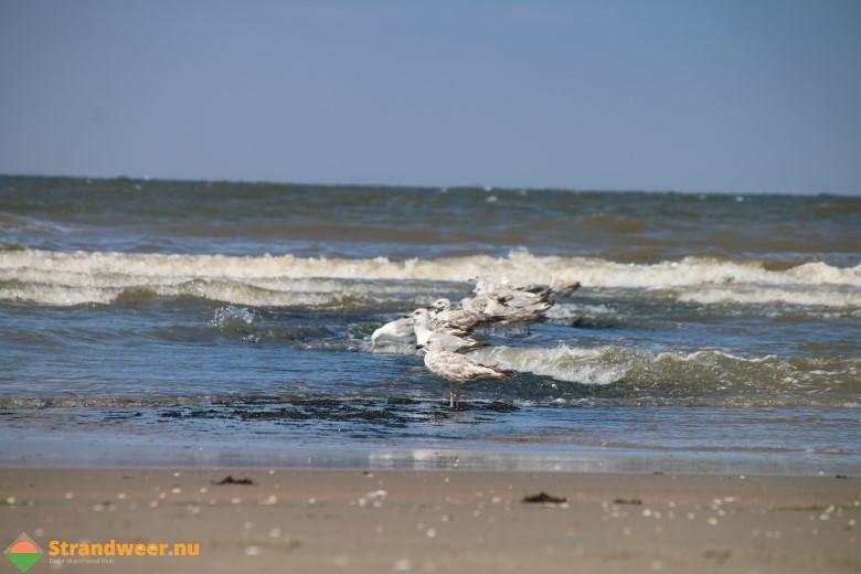 Het strandweer voor woensdag 29 augustus