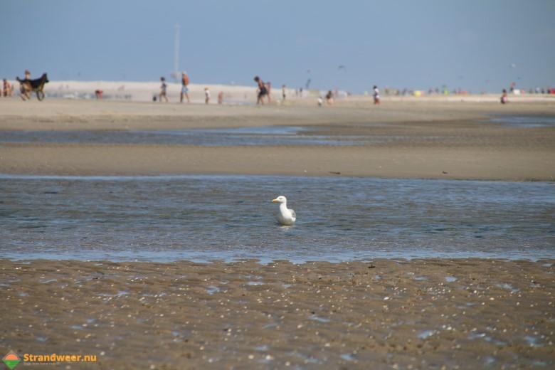 Het strandweer voor vrijdag 3 augustus