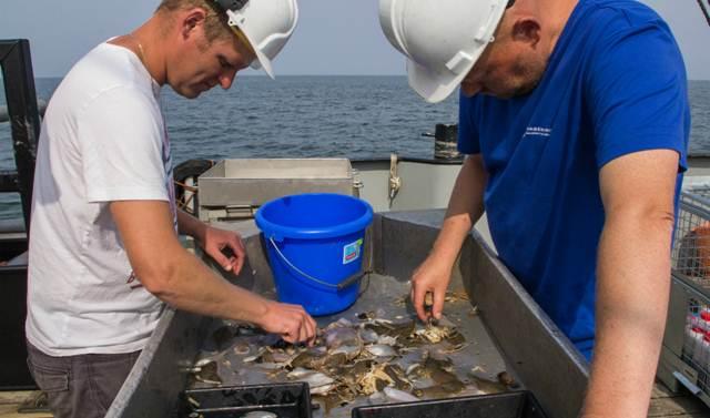 Start onderzoek naar jonge vis in de Noordzeekust