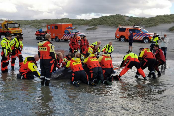 Spitssnuitdolfijnen aangespoeld op het strand