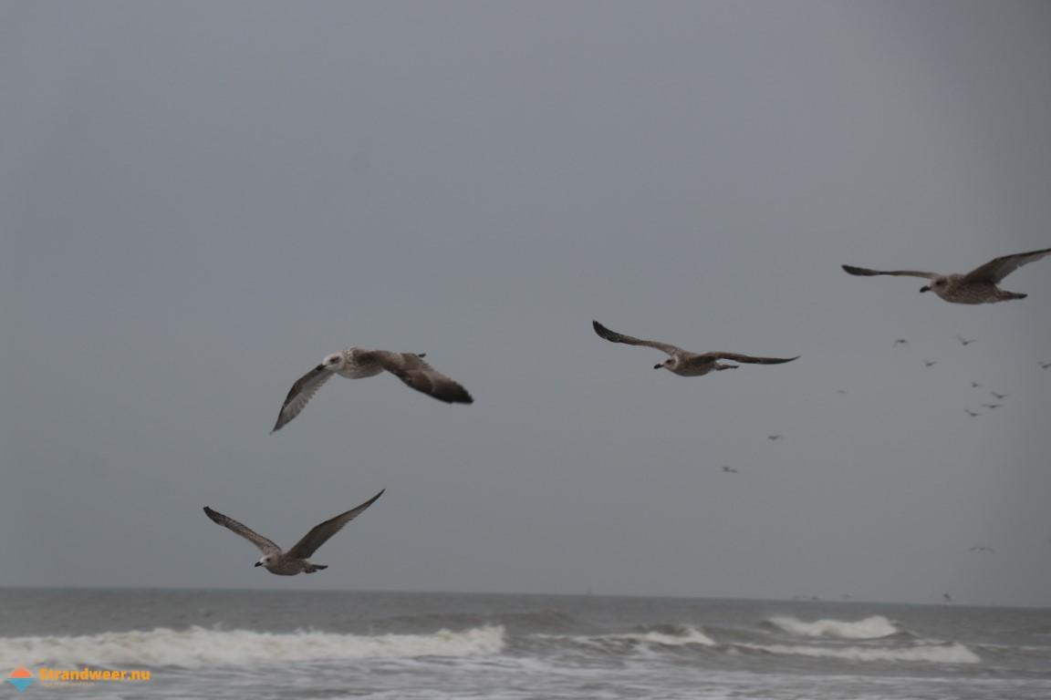 Het strandweer voor woensdag 27 oktober