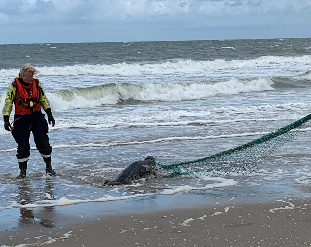Zeehond Langoustinie toch onverwachts overleden