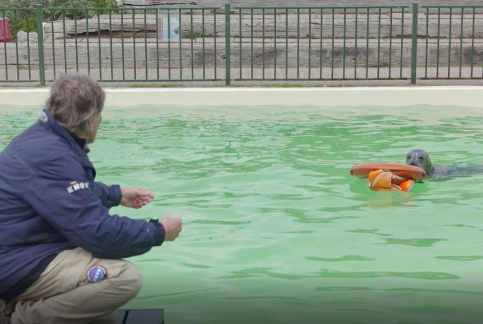 Martin Gaus leidt zeehonden op voor het redden op zee
