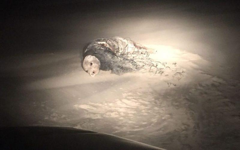 Zeezoogdieren aangespoeld op het strand