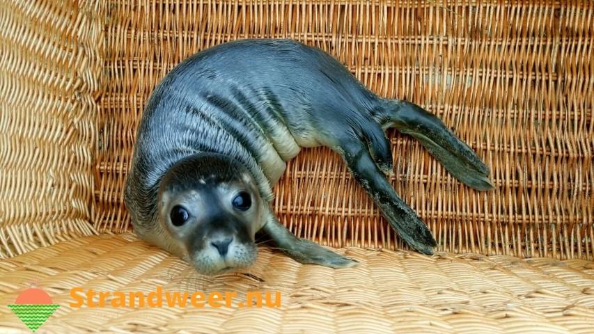 Wat doe je als je een zeehond of bruinvis aantreft op het strand?
