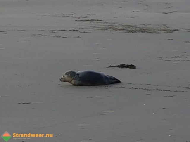 Zes zeezoogdieren aangetroffen op het strand