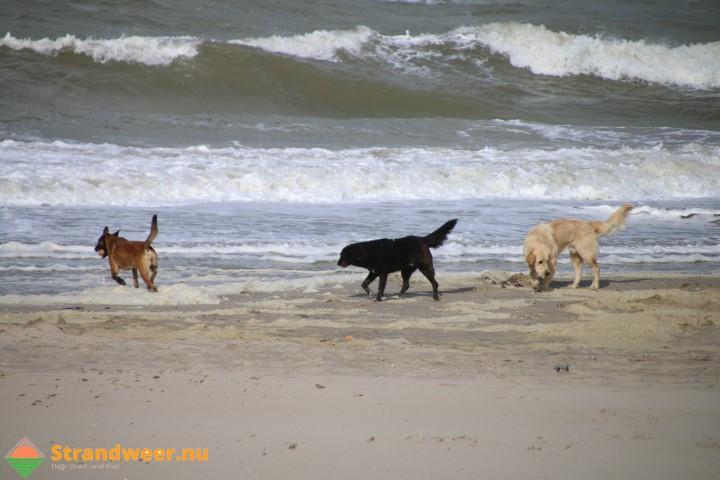 Volgend jaar slechtweerregeling voor deel Haagse strand