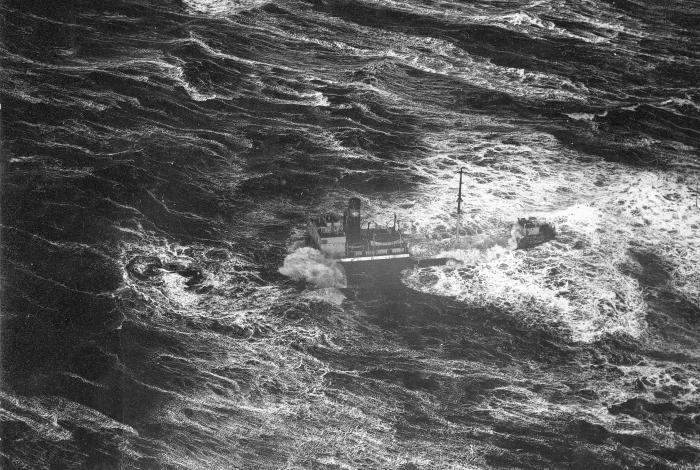 De redding van scheepskat Meta