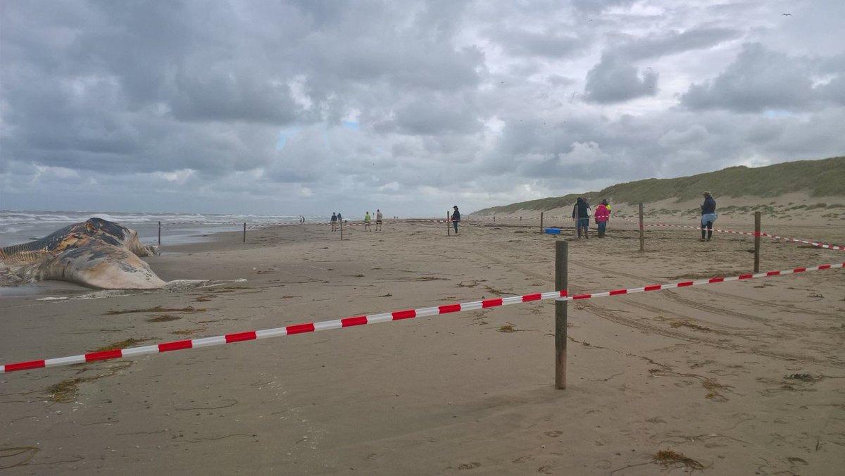 Dode vinvis aangespoeld op Texel
