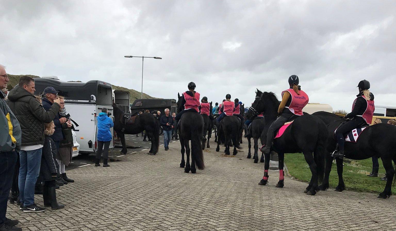 Honderden paarden over het strand