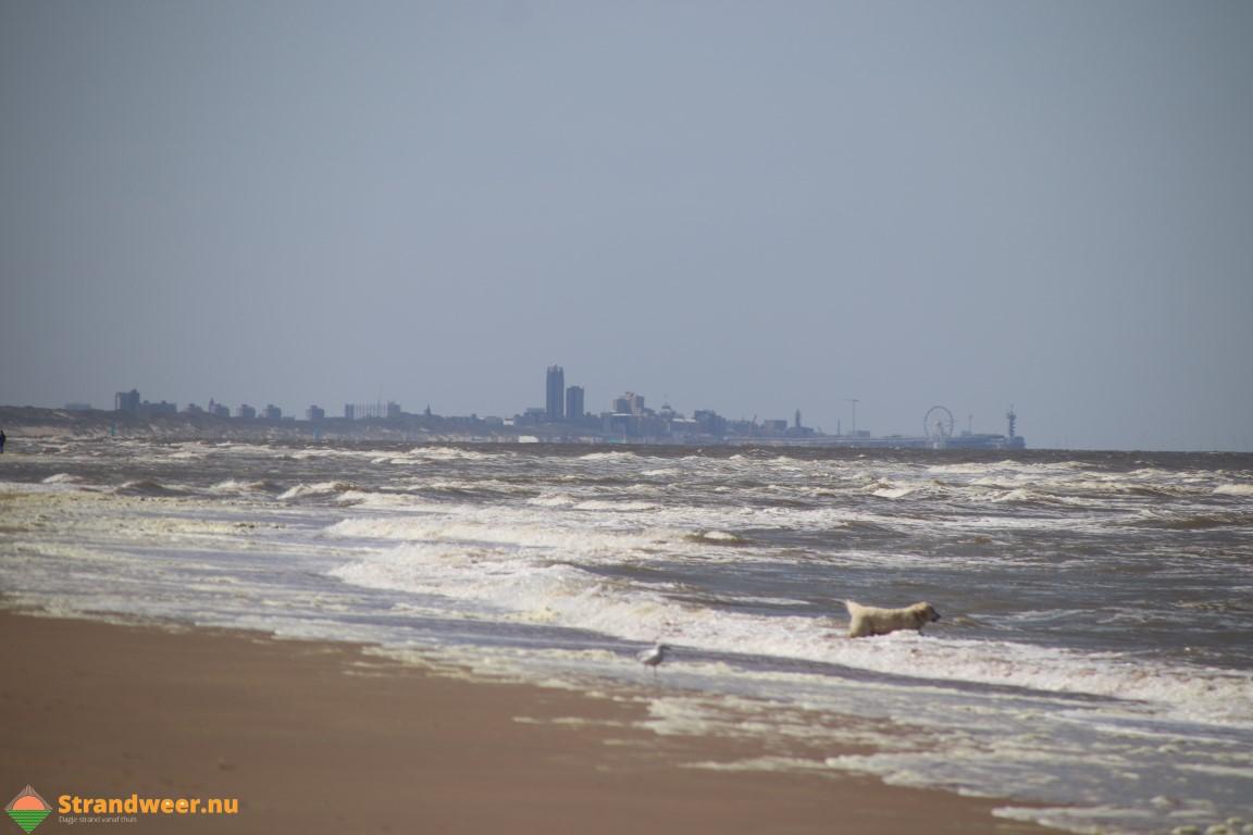 Honden op het Haagse strand