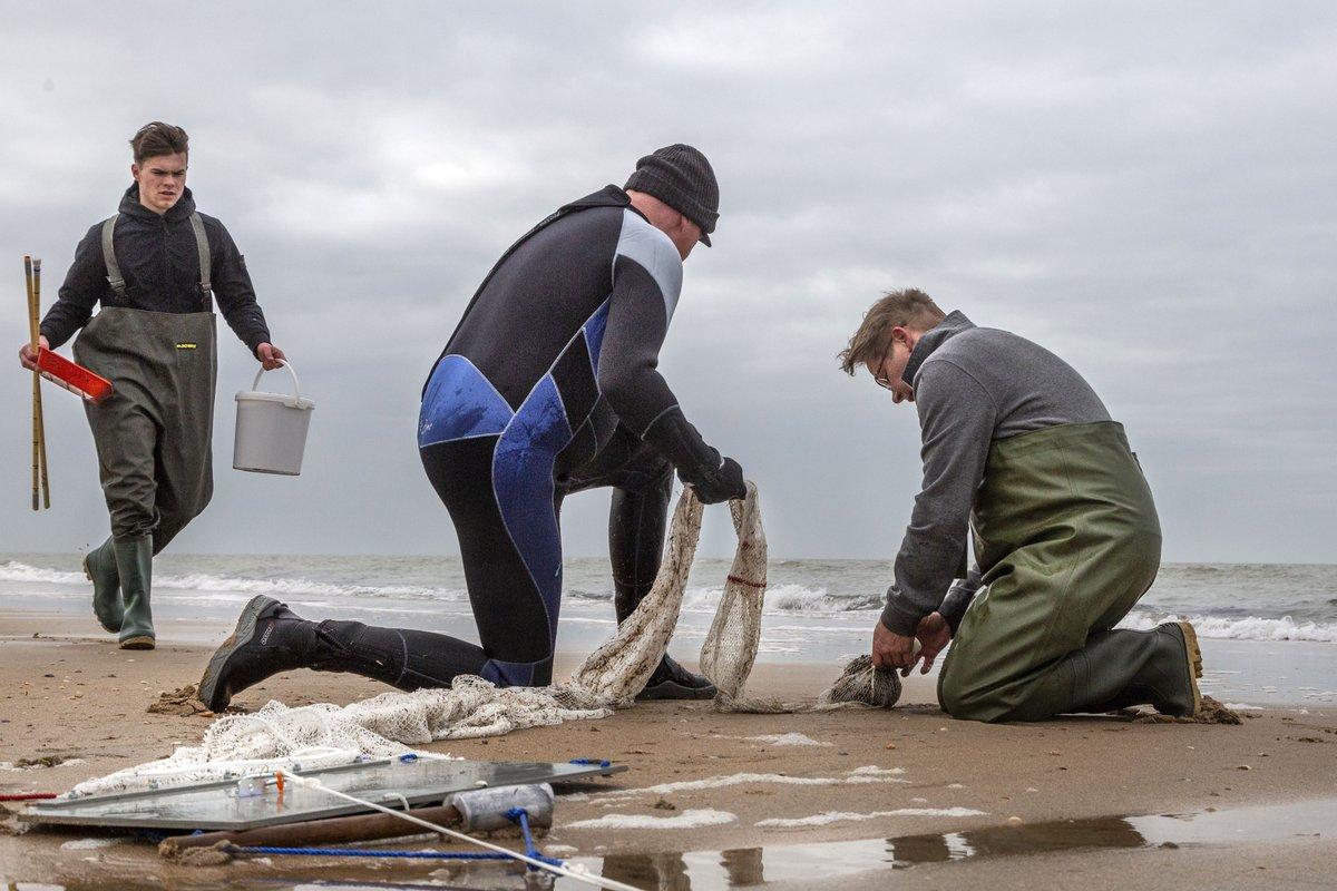 Start onderzoek naar jonge vis bij de Noordzeekust