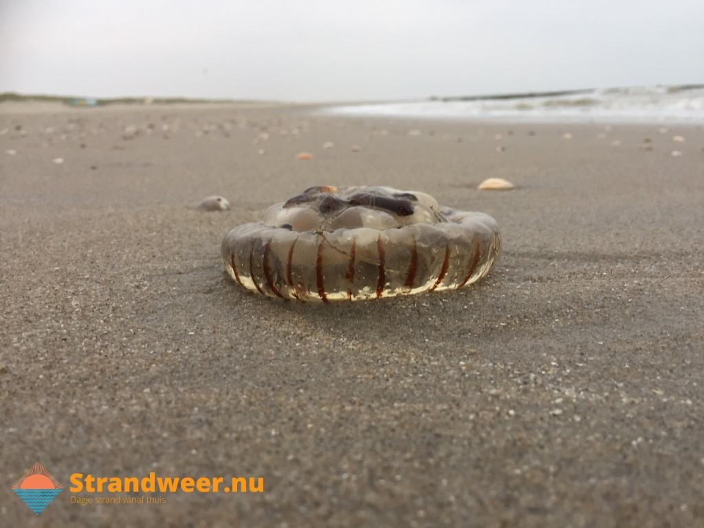 Het strandweer voor 3e weekend van november