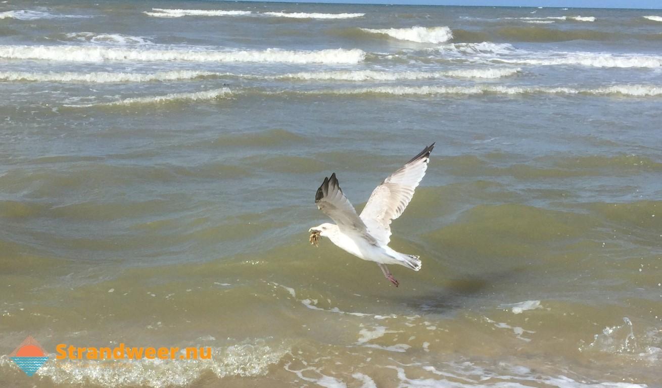 Het strandweer voor vrijdag 13 september