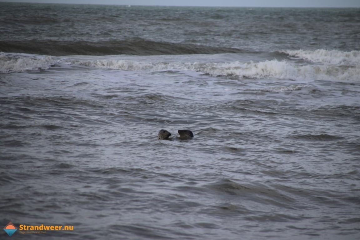 Zeehondenopvang A Seal weer open