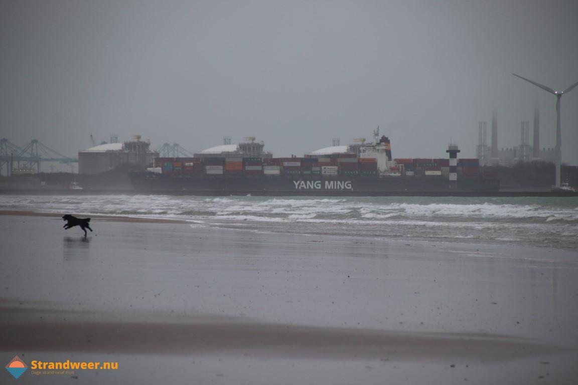 Het strandweer voor zondag 2 februari