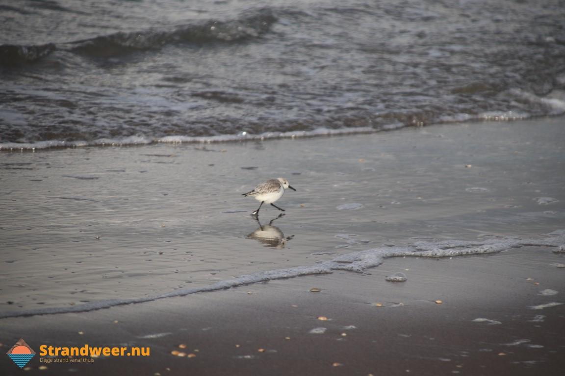 Het strandweer voor dinsdag 7 april