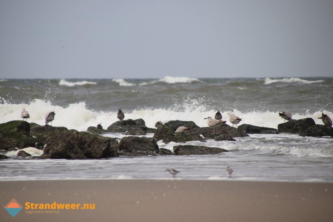 Het strandweer voor dinsdag 24 november