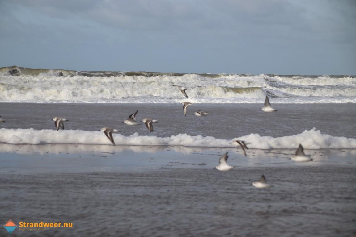 Het strandweer voor zaterdag 29 februari