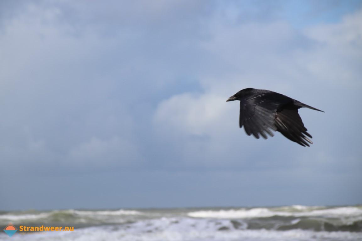 Donderdag koudste strandweer van deze week