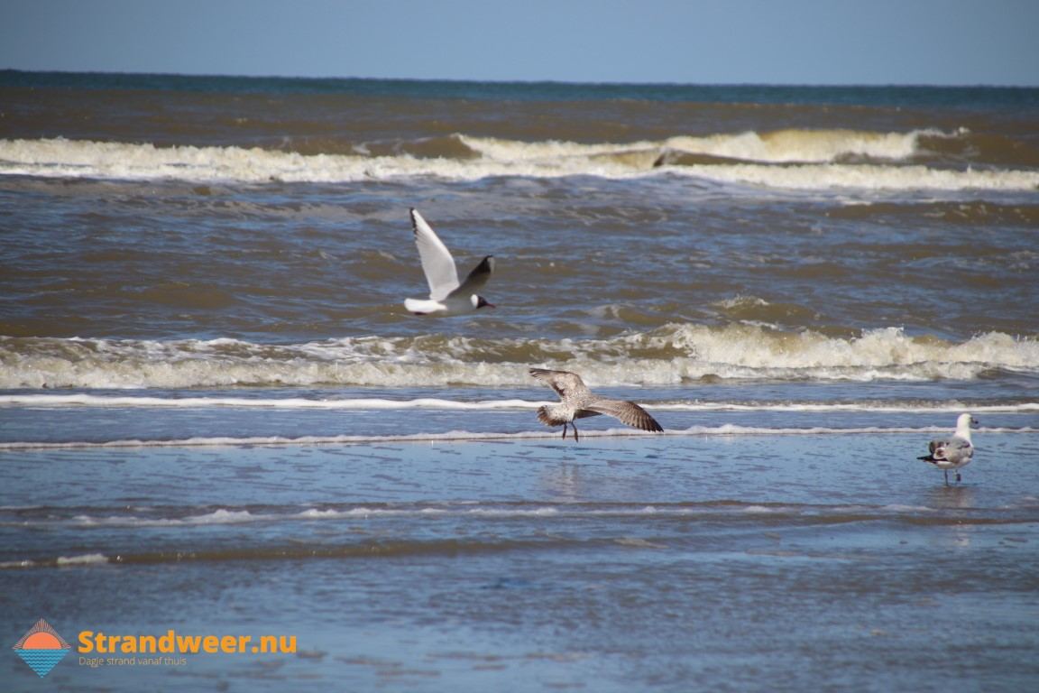 Het strandweer voor woensdag 1 april